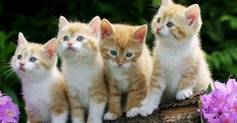 20 Kitten Sayings And Kitten Quotes With Images
