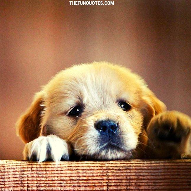 https://wallpaperaccess.com/cute-dog