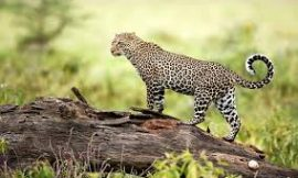 Wildlife Conservation Quotes   Wildlife Quotes   TOP 15 WILDLIFE QUOTES   Wildlife Sayings
