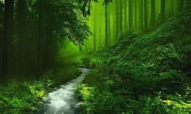 Forest Quotes | Forest Wallpapers : Free HD Download | Forest Pictures | 40 Inspirational Nature Quotes | Forest Sayings and Forest Quotes | Forest Captions