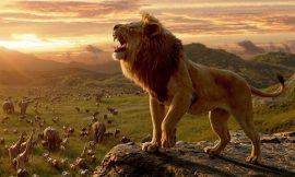 35+ LION QUOTES & Motivational Pictures | LION QUOTES ideas | 40 Motivational Lion Quotes | Lion sayings