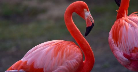 Flamingo Sayings and Flamingo Quotes With Images