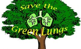 50+ Slogans for Tree Plantation Events and Save Trees Initiatives   Slogans To Save Trees & Forest