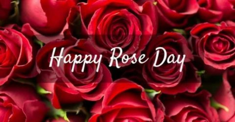 Happy Rose Day 2021 Quotes | Best Rose Day messages Wishes and Messages | Love Wishes
