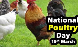 National Poultry Day Quotes : 10+ Messages and  Greetings | TOP 15 POULTRY QUOTES | Hilarious Quotes | 15 Chicken Quotes ideas