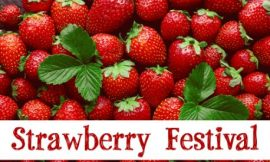 Strawberry Festival: 25+ Greetings Messages and Quotes   Strawberry Festival Captions And Quotes   Quotes about Strawberries   thefunquotes.com