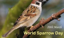 World Sparrow Day: 18+ Best Messages Quotes & Greetings   Best World Sparrow Day Wishes Messages   World Sparrow Day Slogans   World Sparrow Day Quotes and Messages   thefunquotes.com