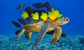 20 Turtle Quotes and Sayings & Sea Turtle Quotes   Quotes about Sea Turtle   Turtle Sayings and Turtle Quotes   thefunquotes.com