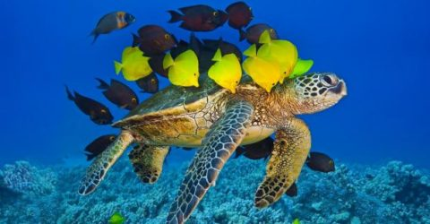 20 Turtle Quotes and Sayings & Sea Turtle Quotes | Quotes about Sea Turtle | Turtle Sayings and Turtle Quotes | thefunquotes.com