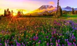 21+ Wildflower Quotes For The Untamed Heart | Flower Quotes To Appreciate Nature's Beauty | 22 Best Flower Quotes to Inspire Growth | Wildflowers Quotes | thefunquotes.com